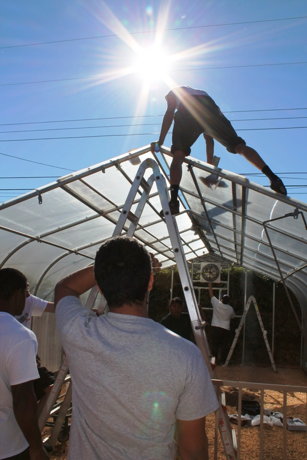 Robert Oshodin, a University of La Verne freshman and a sprinter on the track team, tackles dismantling greenhouse from above as part of Martin Luther King Community Service Day. Oshodin is from Nigeria.